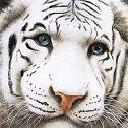 http://forum.zoologist.ru/img/avatars/756.jpg